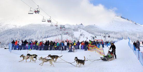 Snežné psy 2016